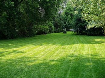 Intensive Lawn Care Wildwood MO Homeowners Need for Damaged Lawns