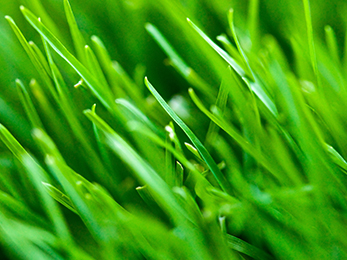 Perfect Early Spring Lawn Care in Eureka MO