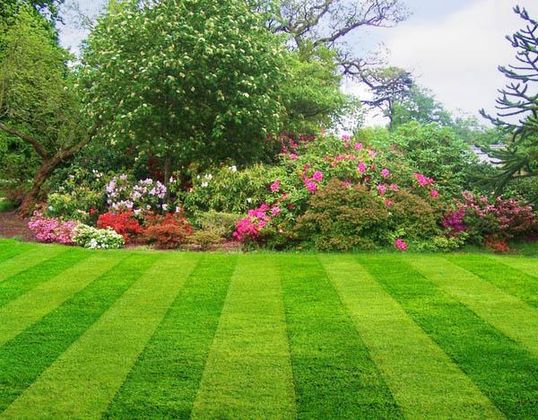 Elegant Lawn Care Kirkwood MO