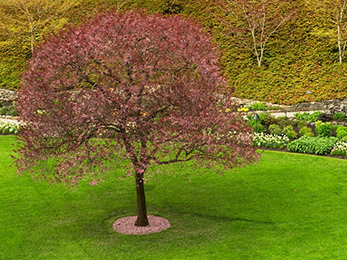 Tree Care in Spring: Lawn Treatments Chesterfield MO Pros' Tips