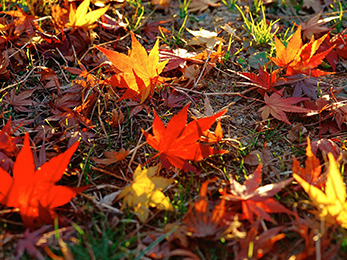 Mandatory Fall Activities to Perform this Year: Lawn Care Ballwin MO Experts' Advice