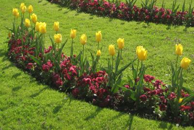 Landscaping in Ballwin MO