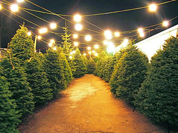 How to Turn the Christmas tree into the Best Lawn Care in Ellisville MO solutions
