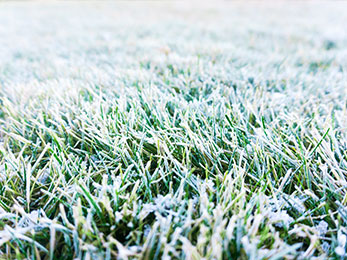 Can You Avoid Salt Damage This Year? Lawn Care St. Peters, MO Experts Say You Do!