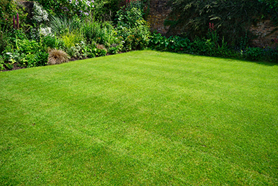 Lawn Treatments in Creve Coeur MO