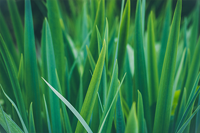 Lawn Treatments in St. Charles MO