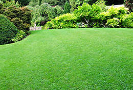 Lawn Treatments in St. Peters MO